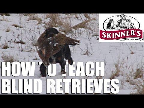 Gundog training tips – Teaching the blind retrieve