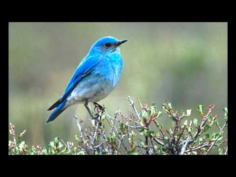 Bluebird (Song) by Alan Hawkshaw