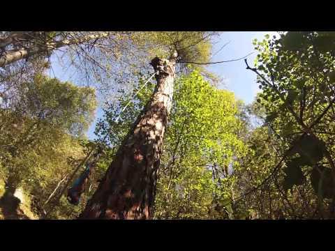 Ramponi da albero
