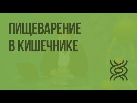 Где сдать анализы на гепатит с в ульяновске