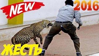 Сумасшедшие Нападения Животных На Человека 2016  Craziest Animal Attacks On Human 2016