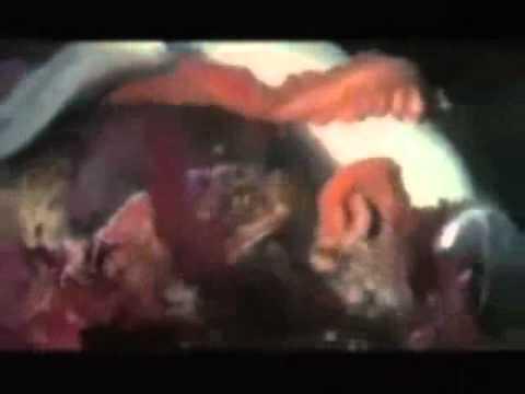 תיעוד מדהים של תמנון הורג כריש!