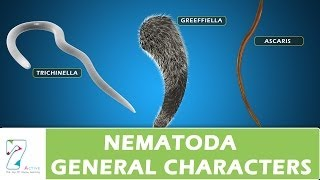 CH05-DIVERSITY IN ANIMAL KINGDOM-PART03-NEMATODA