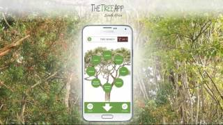 A forest on your phone