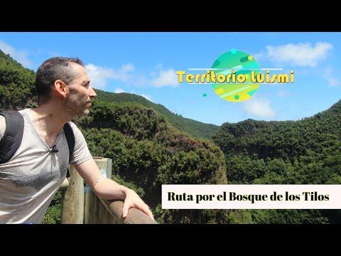 Bosque De Los Tilos - Cascada Y Sendero Del Espigón - La Palma