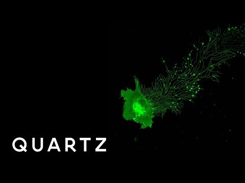 hqdefault - Nikon Small World en Motion 2017, el mundo a traves de un microscopio óptico