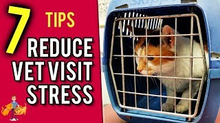 How to Take Your Cat to the Vet (the Stress Free Way!) - Cat Health Vet Advice