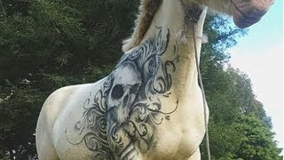Artist Gives White Horse A Confidence Boosting TATTOO