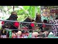 Dolalak Tunas Karya, di Trimulyo, Grabag, Purworejo, video 4 – 24. Tgl. 26 April 2018