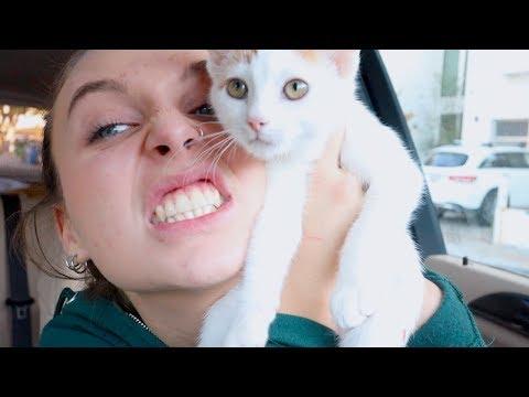 I GOT ANOTHER CAT mp3 yukle - Mahni.Biz