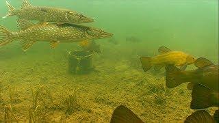 Подводная  охота