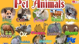 Pet Animals | Domestic animals  | common pets  for kids children  students and school.
