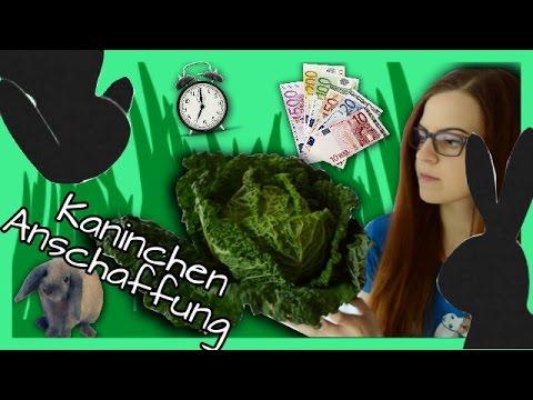 Kaninchen Anschaffung: Was muss ich beachten? | Haltung, Ernährung, Zeit & Kosten ...