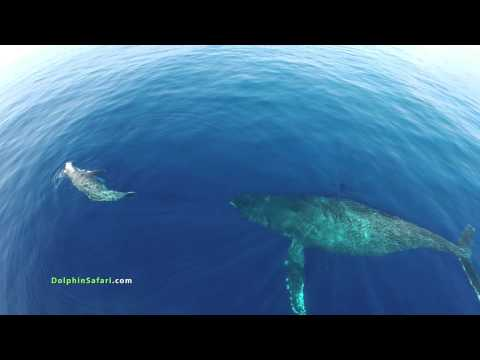 Dolphin Ecards If you like this video you ll love our new drone..