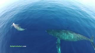 Смотреть онлайн Захватывающие кадры жизни китов и миграции дельфинов