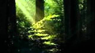 Flare Star - The Forest Of Light.