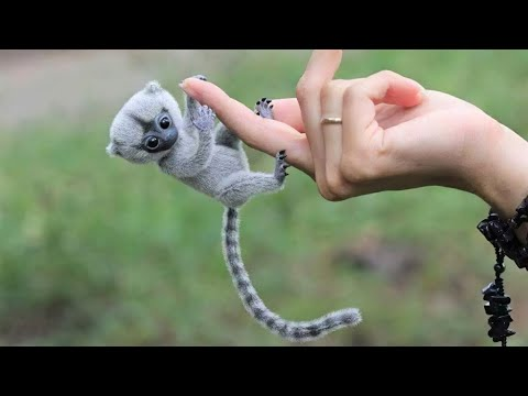 10 Adorable Exotic Animals You Could Own as Pets