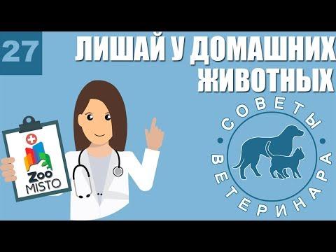 Лишай у домашних животных | Признаки и лечение Лишая | Советы ветеринара