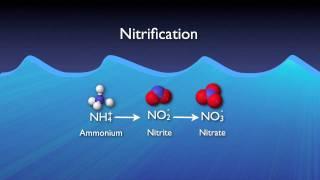 Nitrogen Removal Basics