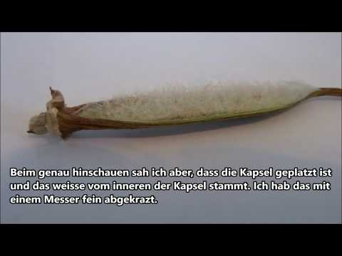Wie darsonwal bei der Schuppenflechte zu verwenden