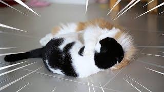 การทดลอง - กัญชาแมวคลั่ง
