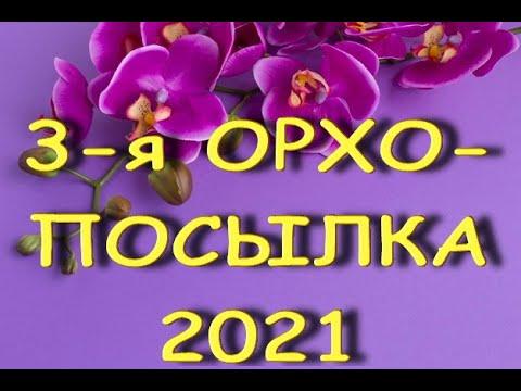 3-я ПОСЫЛКА с ОРХИДЕЯМИ:надеюсь,ВЫХОЖУ! 2021.