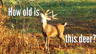Learn How to Age a Whitetail Deer with Keith Warren