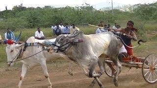 Bullcart Race Lokapur.Part 3.बैलगाडीची शर्यत. Bull Arabası Irqi.公牛车比赛