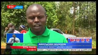 Armyworms invade maize farms in Trans Nzoia