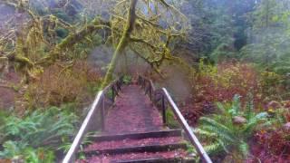 Redwoods National Forest - DJI - Phantom 4 - Hiking & flying the trails