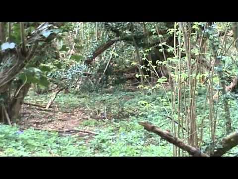 Aromas como cebo MPG para la caza (Scent Hide Action MPG)