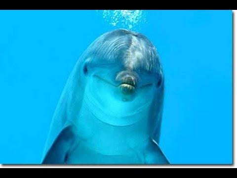 GRAND SIRENIS – Dolphin Park (Mexico)