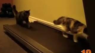 Самые прикольные кошки