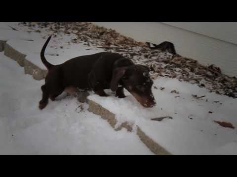 Iso In Slow Motion – In Snow [AWWW]