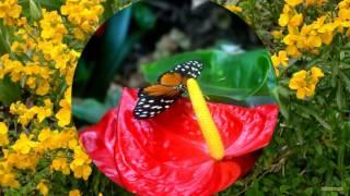 Beautiful Flower Wallpapers -  Barbaras HD Wallpapers
