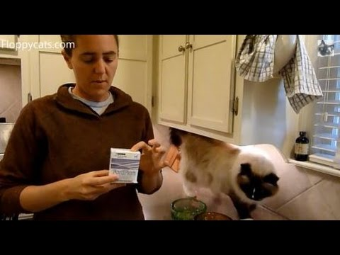 FortiFlora FELINE - Box of 30 (1 gram packets) Video