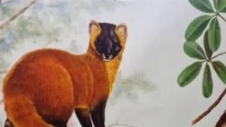 第2回 広げよう『野生動物の歩道橋』 ~コリドーで繋ぐ森と命~