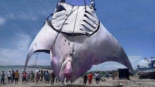 Most BIZARRE Sea Creature Behavior!