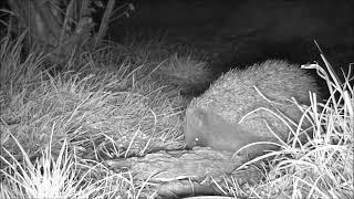 Wildlife Trail Camera - 3.4.2019