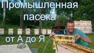 """Промышленная пасека в Беларуси от А до Я"" - Гращенко Михаил"