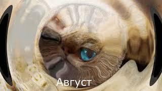 Какой ты котик по месяцам