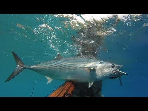 La protezione chimica per pescare nel prezzo