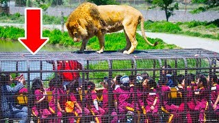 Reversed Zoo: Animals Are Free, People Are In Cages