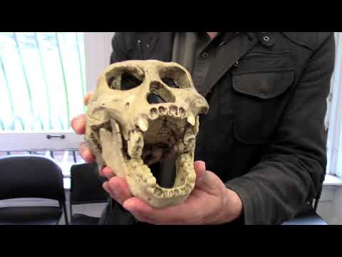 They LIED to You & Hid Nephilims, Cyclops, Hobbits & Aliens Skulls But Igor Kryan Found Them
