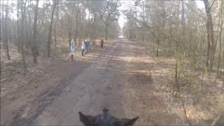 2018  Maartje Siemons  B-Paarden