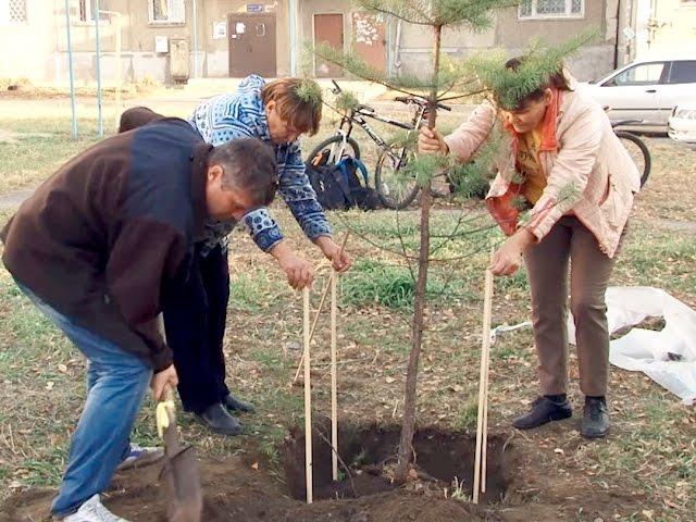 В Ангарске пересаживают деревья