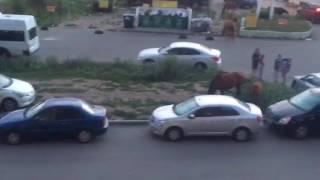 Лошади сбежали