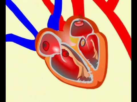 Fizjoterapia w chorobą zwyrodnieniową stawu kolanowego stawu kolanowego