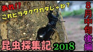 昆虫採集記2018ついに見つけた!!念願のヒラタクワガタ8月中旬後編