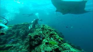 Dykning Med Manta Rays - Hin Muang & Hin Duang